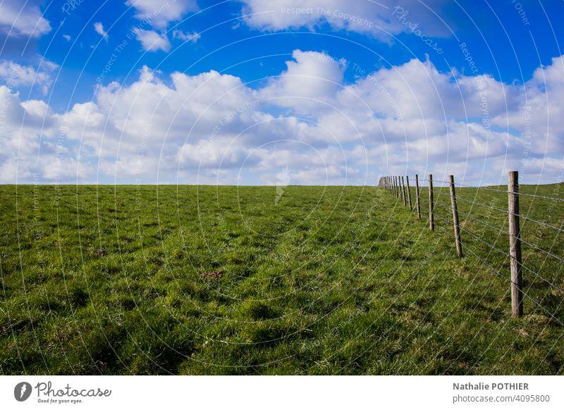 Wiese mit Zaun und blauem Himmel Sommer Blauer Himmel Gras Wolken Landschaft Natur grün Außenaufnahme Schönes Wetter Feld Sonnenlicht Umwelt Weide Tag Farbfoto