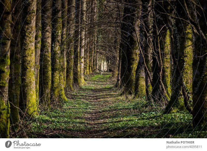 Pfad im Wald Weg Schneise Natur Bäume grün Außenaufnahme Baum Landschaft Farbfoto Pflanze Umwelt Menschenleer Schatten Tag Sonnenlicht Windstille Erholung