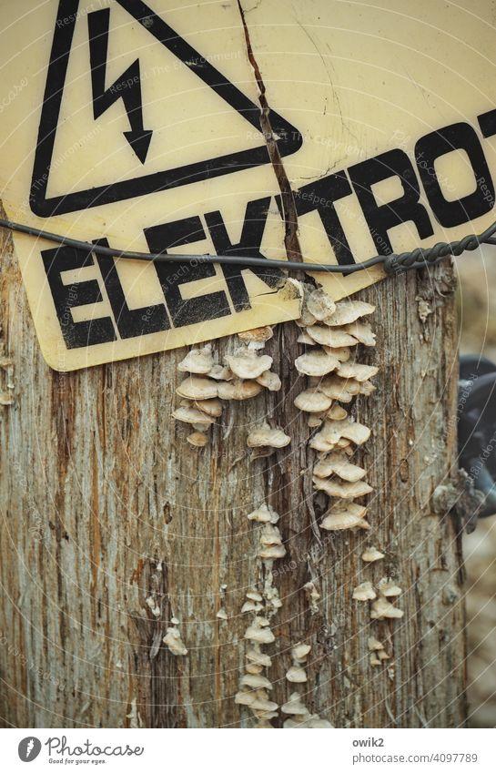 Aufgeladen Mast Strommast Zaun Elektrozaun elektrisch geladen Schild Warnschild Vorsicht Buchstaben Warnhinweis Warnung aufpassen nicht berühren Pilze wachsen