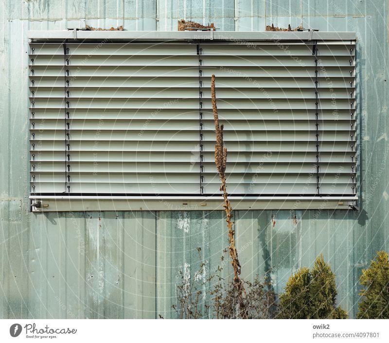 Dicht Fenster Jalousie zu geschlossen Fassade Rollo Haus Außenaufnahme Wand Menschenleer Rollladen Schatten Strukturen & Formen Pflanze Architektur Gebäude