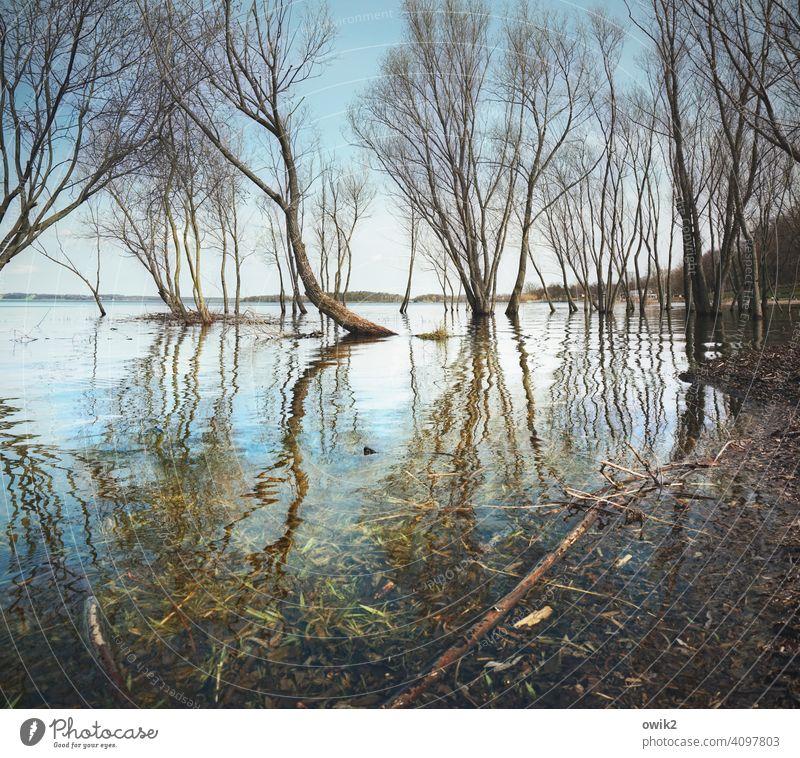 Louisiana Bäume Wasser Land unter Zweige nasse Füße Flut überflutet Überschwemmung Äste Frühling Wasseroberfläche Reflexion & Spiegelung Himmel Horizont