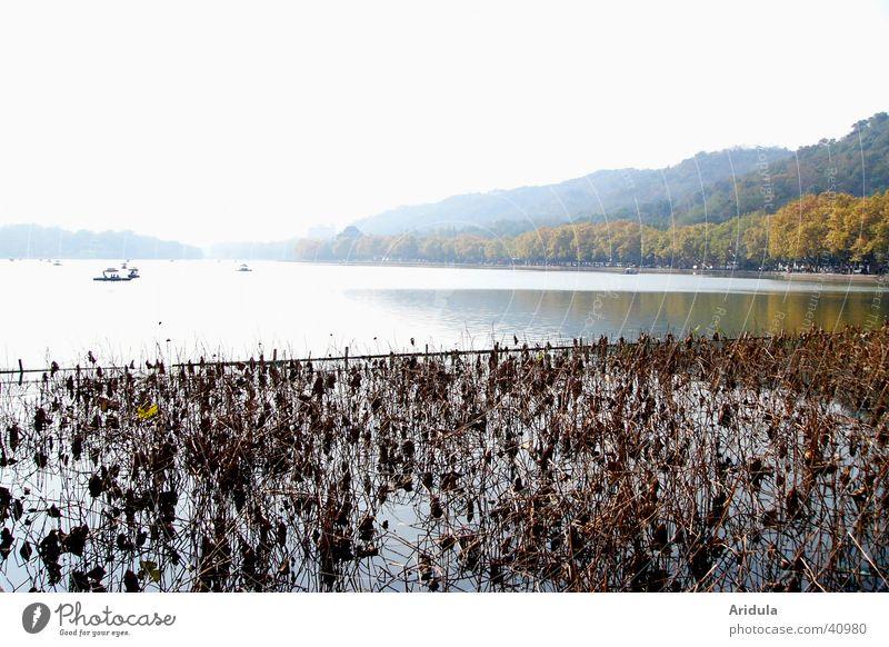 natur_03 Wasser Wald See Landschaft Küste Asien Hügel China Wasserpflanze Hangzhou