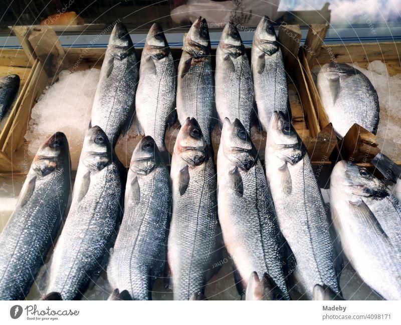 Frischer Fisch auf Eis in Holzkisten vor einem Geschäft in Bursa in der Türkei frisch gekühlt Fischgericht Küche kochen Markt Wochenmarkt Basar Schuppen Kiemen
