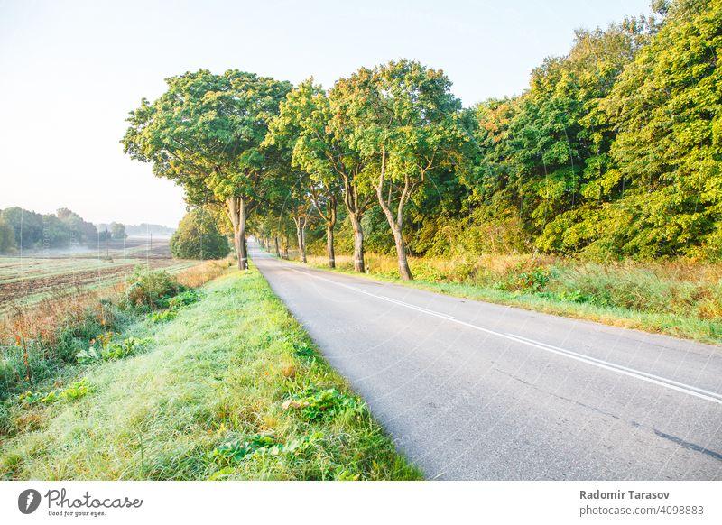 neue asphaltierte Straße im Wald Asphalt Ausflug Laufwerk Sommer reisen Land Autobahn Reise grün Natur im Freien Landschaft leer Ansicht Baum Weg Umwelt