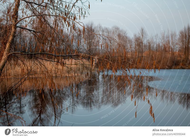 Frühlingsabend an einem Teich Wasser See Baum Reflexion & Spiegelung Natur Wasserspiegelung Landschaft Seeufer Windstille Farbfoto Himmel Schönes Wetter