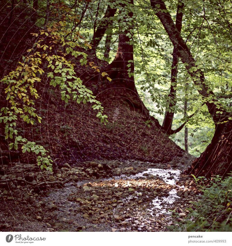 zufluchtsort Natur Sommer Wasser Baum Landschaft ruhig Wald Romantik Zeichen geheimnisvoll Wachsamkeit verstecken Bach Geborgenheit Heimweh Allgäu