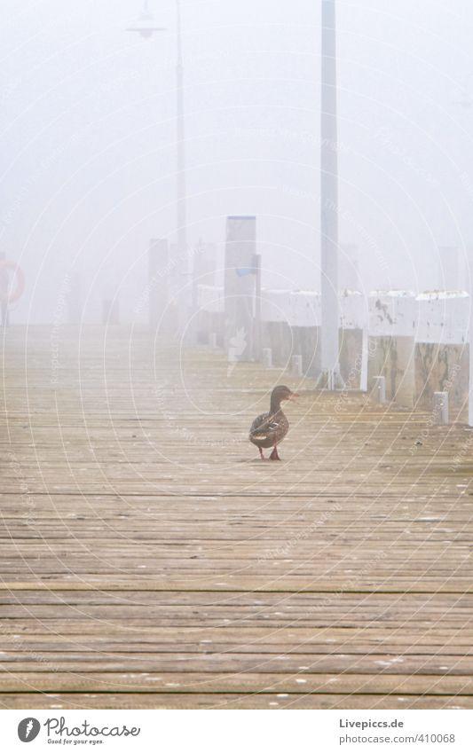 ...mein Weg ruhig Tier gelb grau Holz Lampe träumen Erde braun Vogel Nebel Wildtier genießen Gelassenheit Steg Ente