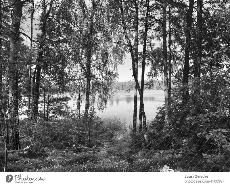 Der See im Sommer Seeufer Holz Wald Waldspaziergang Waldsee Reflexion & Spiegelung Birke Baum Wasser Wasserspiegelung Umwelt Natur Wasseroberfläche Landschaft
