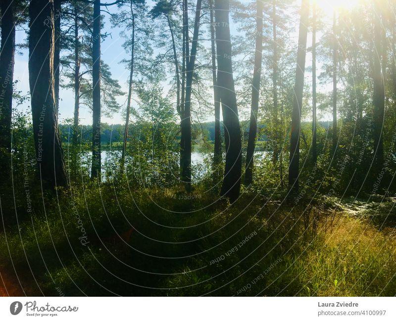 Der See an einem Sommertag, Lettland Wasser Seeufer Holz Wald Waldspaziergang Waldsee Reflexion & Spiegelung Birke Baum Wasserspiegelung Umwelt Natur