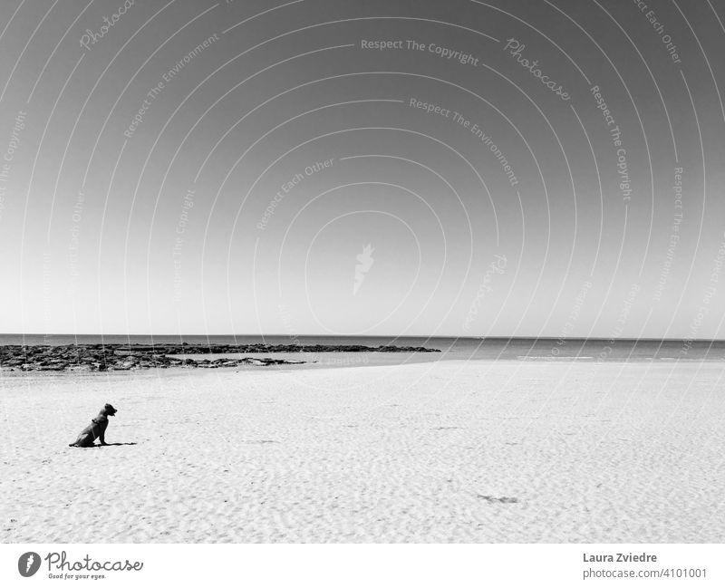 Hund am Strand Gassi gehen Haustier Spaziergang Natur MEER Meer Meeresstrand laufen Säugetier Küste Sommer Außenaufnahme mit dem Hund rausgehen Menschenleer