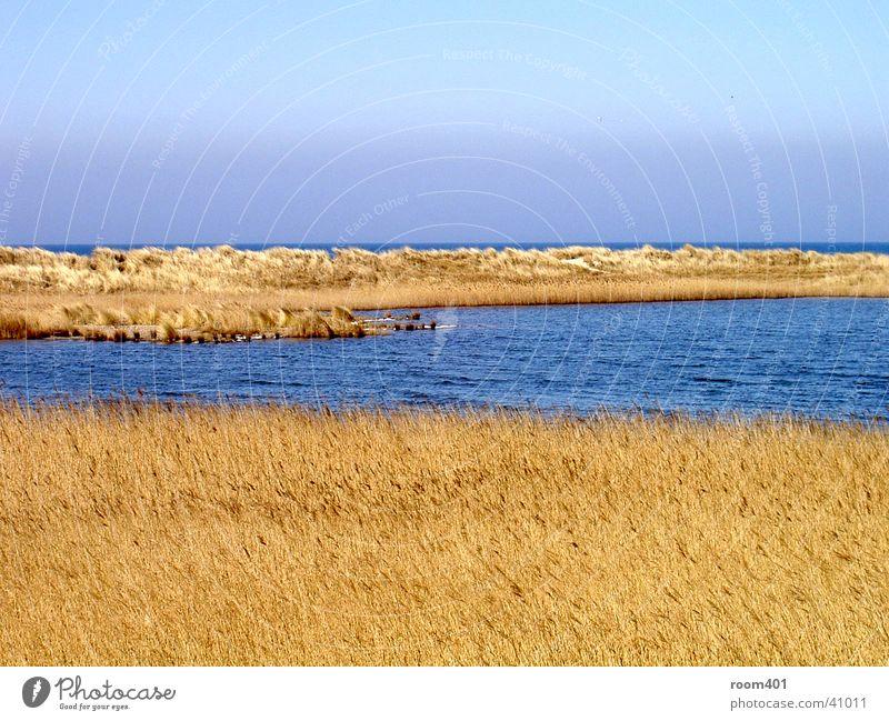 düne durchflossen Gras trocken Schilfrohr Meer ruhig Wasser Stranddüne sanft