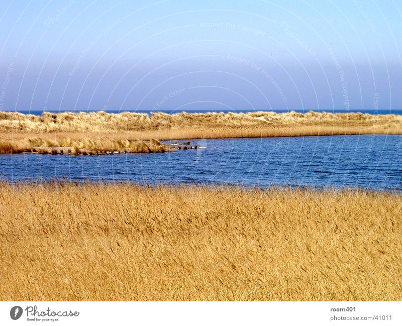 düne durchflossen Wasser Meer ruhig Gras Schilfrohr trocken Stranddüne sanft