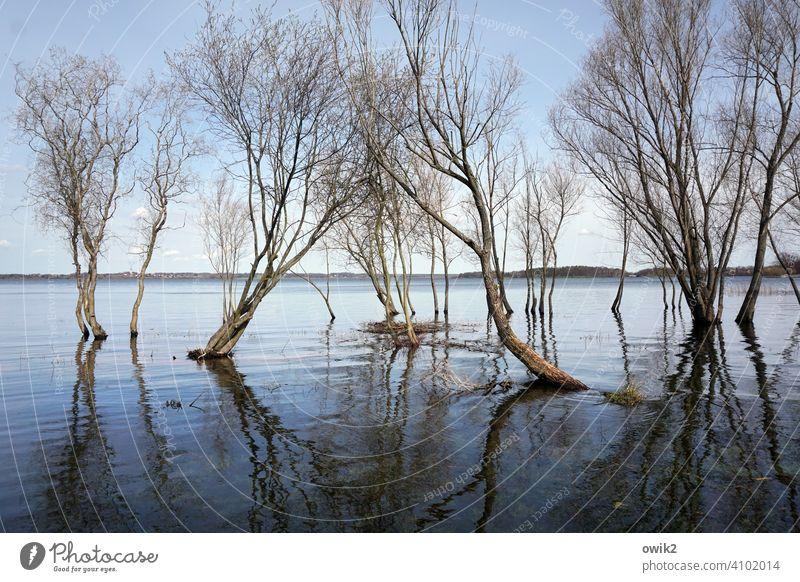 Delta Bäume Wasser Land unter Überschwemmung überflutet Flut nasse Füße Zweige Äste Frühling Wasseroberfläche Spiegelung im Wasser Reflexion & Spiegelung Himmel