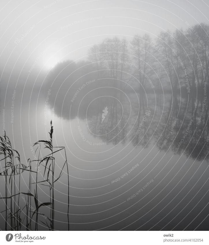Begrenzte Aussicht Umwelt Natur Landschaft Wetter Klima Winter Sonne Baum Sträucher karg Zweige u. Äste Riedgras Nebel Schönes Wetter Pflanze Horizont schön