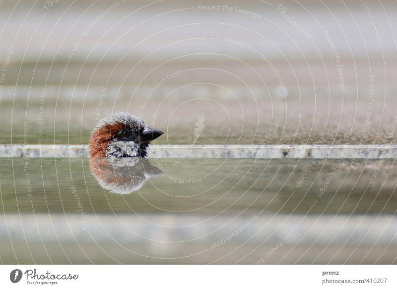 Köpfchen Umwelt Natur Tier braun grün Spatz Kopf Spiegelbild Reflexion & Spiegelung verstecken Vogel Farbfoto Außenaufnahme Menschenleer Textfreiraum oben