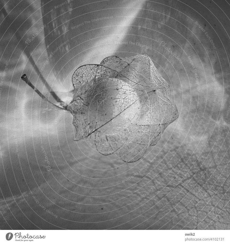 Verschleiert Detailaufnahme Nahaufnahme Muster durchsichtig Strukturen & Formen Textfreiraum unten Menschenleer Textfreiraum links Textfreiraum oben Totale