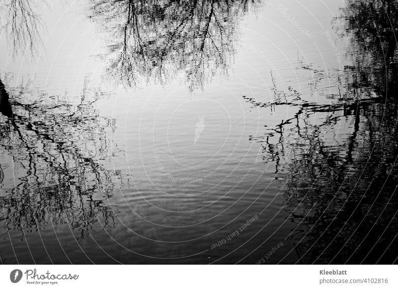 Schwarz-weiß  Aufnahme kahler Baumwipfel die sich im Wasser spiegeln Kahl, Spiegelung, Wasser, Reflexion & Spiegelung Natur Spiegelung im Wasser Himmel
