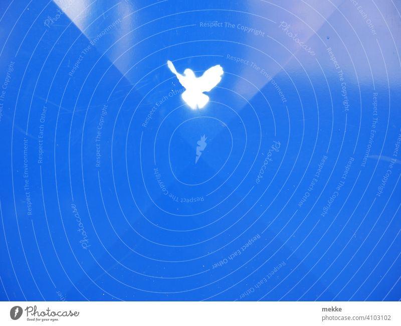 Friedenstaube auf blauem Blech Taube weiß Zeichen Symbol Symbole & Metaphern Vogel minimalistisch Hoffnung friedlich Schriftzeichen Freiheit Müllbehälter