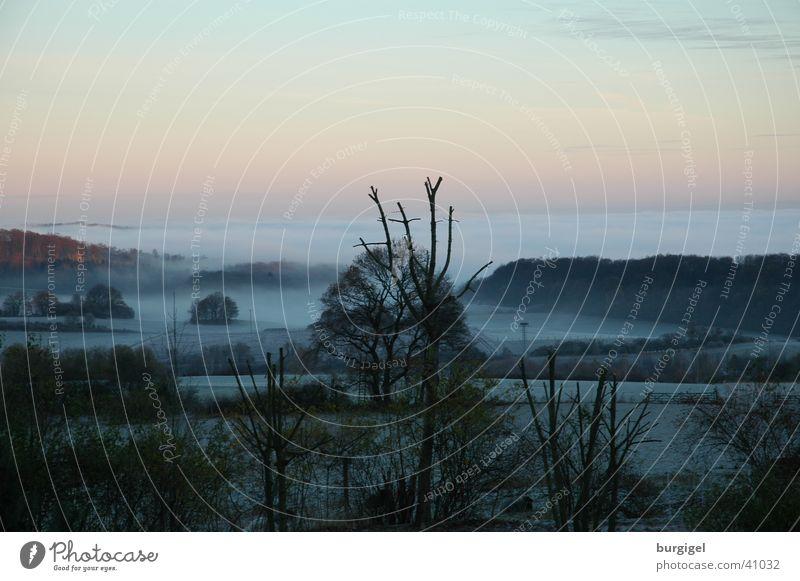 Morgennebel Himmel Baum Berge u. Gebirge Landschaft Nebel Tal