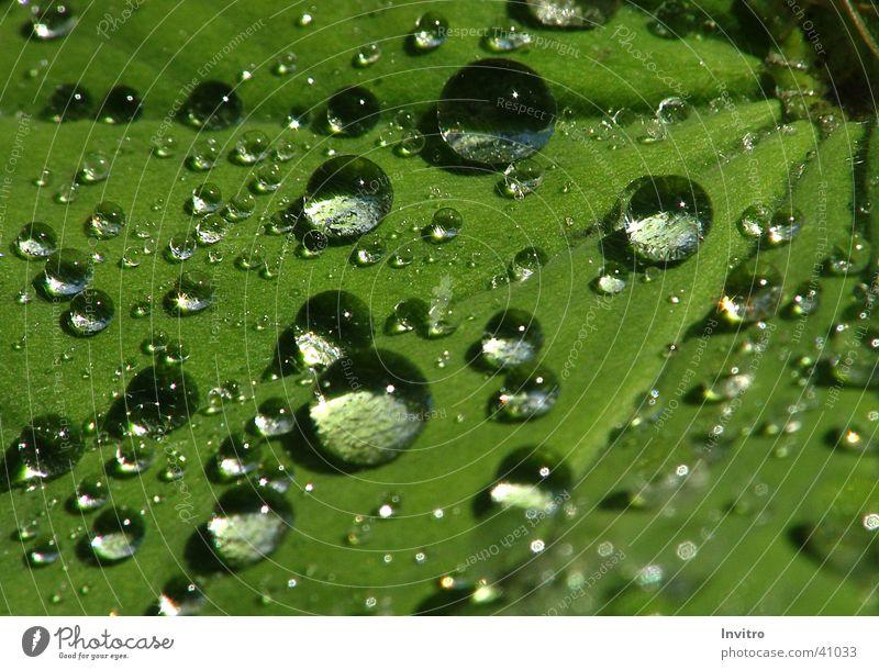 Nach dem Regen Blatt Makroaufnahme Wassertropfen