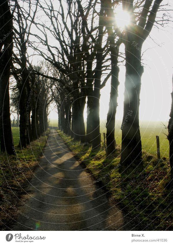 Baumallee im Gegenlicht Winter Allee Sonnenuntergang Niederrhein Xanten wandern Fußweg Zaun Wiese Wald Landschaft Straße Wege & Pfade Schatten Ast Zweig Natur