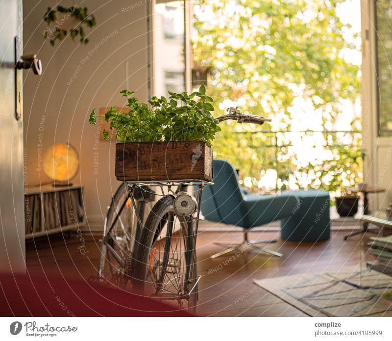 Holzkiste mit Kräutern auf einem Fahrrad im Wohnzimmer Sonnenstrahlen Sonnenlicht Tag Gartenarbeit Basilikum nachhaltig Verkehr Stadt Fahrradfahren