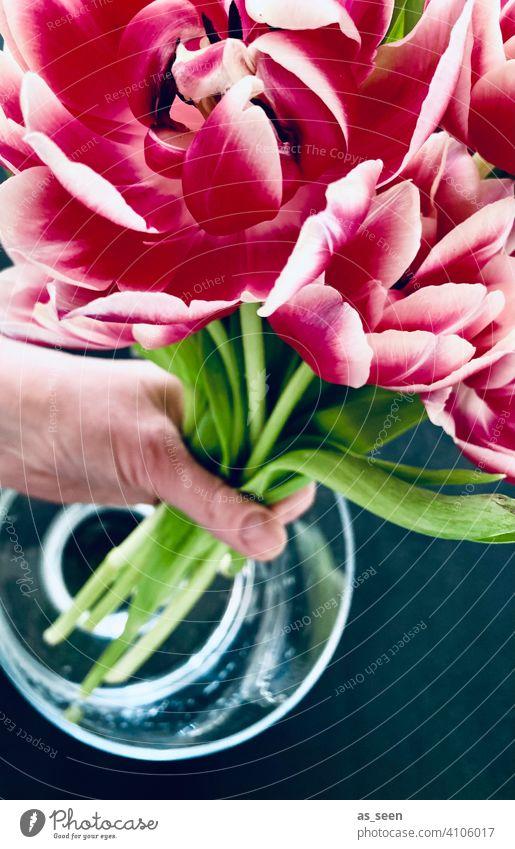 Tulpen in die Vase stellen gefüllte Tulpe grün grau anthrazit Hand Wasser Dekoration pink weiss Frühling Blumenstrauß Blüte Dekoration & Verzierung Pflanze