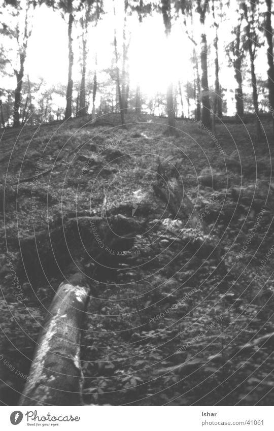 splattering Times Natur weiß Baum Blatt schwarz Wald blenden
