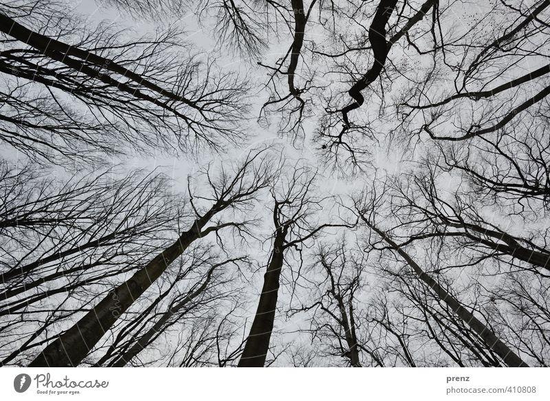 Froschperspektive Himmel Natur Pflanze Baum schwarz Winter Umwelt grau Ast himmelwärts Richtung