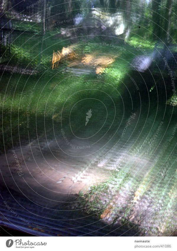 spiegelung Natur grün Wald Wiese Lichtspiel