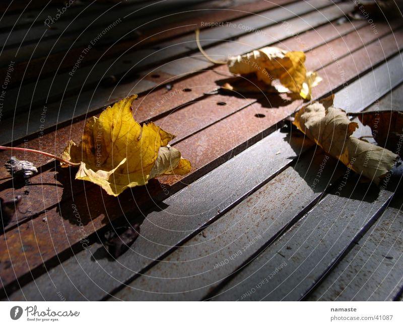 vergänglichkeit Blatt Herbst Vergänglichkeit Rost