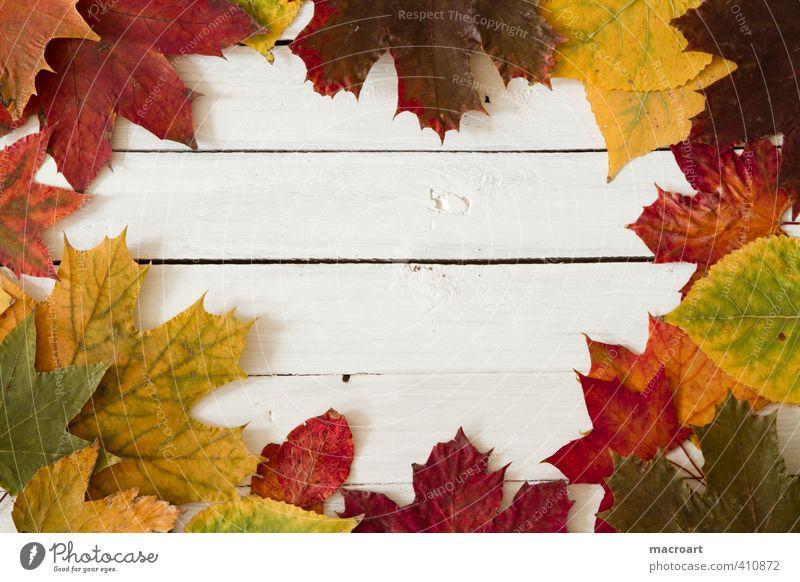 Herbst rot Blatt gelb Herbst liegen orange Dekoration & Verzierung Jahreszeiten trocken Herbstlaub herbstlich Ahornblatt vertrocknet Ahorn getrocknet horizontal