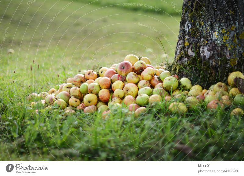 Apfelhaufen Lebensmittel Frucht Ernährung Bioprodukte Garten Herbst Baum Wiese süß Fallobst Streuobstwiese reif faulig Gartenabfall Kompost Haufen Ernte
