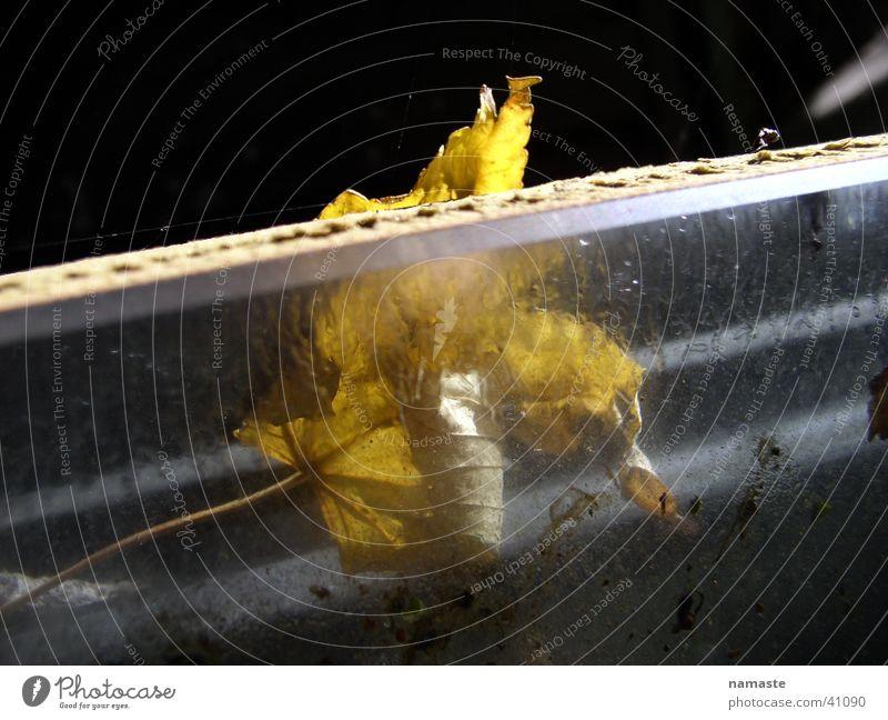 noch mehr vergänglichkeit Natur Blatt gelb Herbst Glas hinten