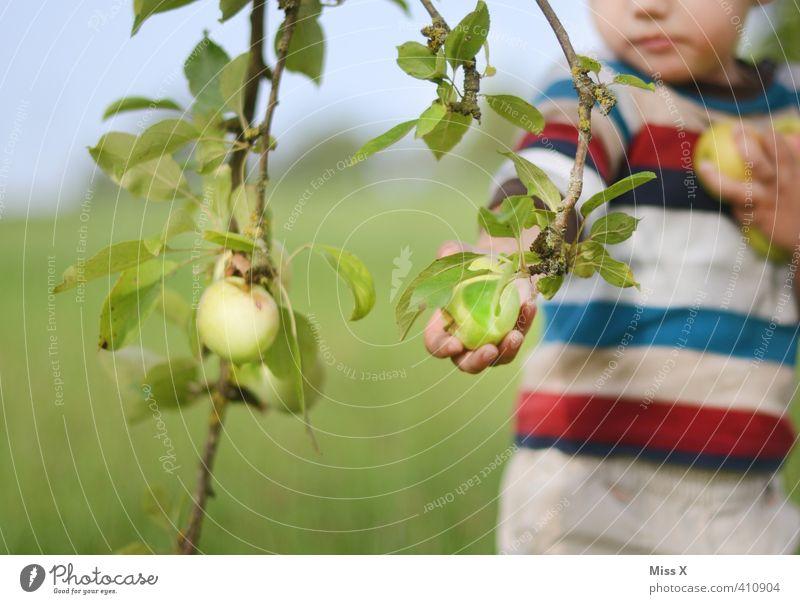 Apfelernte Mensch Kind Herbst Essen Gesundheit Garten Lebensmittel Frucht Kindheit frisch Ernährung süß Ast Apfel Ernte Kleinkind