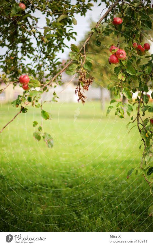 Obstwiese Lebensmittel Frucht Apfel Ernährung Bioprodukte Vegetarische Ernährung Sommer Herbst Schönes Wetter Baum Garten frisch Gesundheit lecker saftig süß