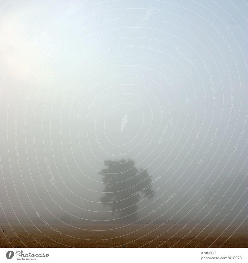Vernebelt Urelemente Luft Sonnenaufgang Sonnenuntergang Sommer Nebel Baum ästhetisch natürlich Kraft Vertrauen Romantik Güte ruhig demütig träumen Trauer
