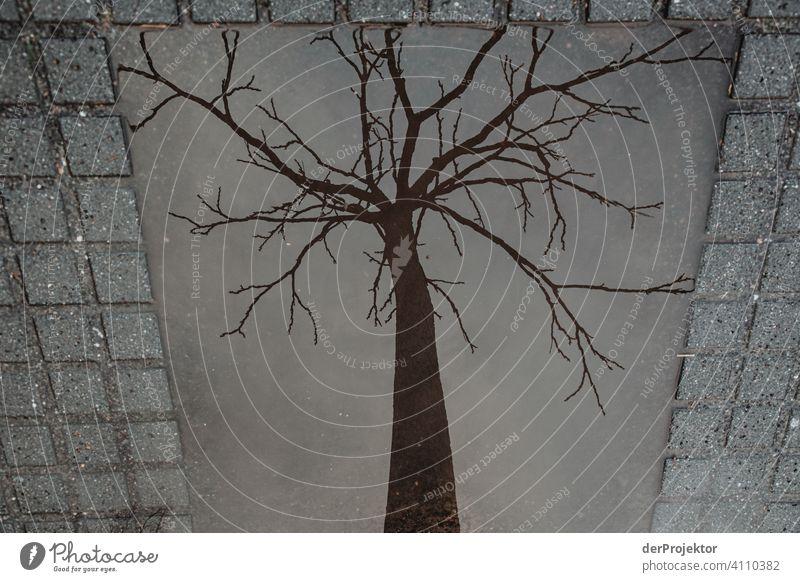 Blätterloser Baum in in der Reflektion einer eckigen Pfütze II Zentralperspektive Reflexion & Spiegelung Schatten Textfreiraum oben Dämmerung Kunstlicht Licht