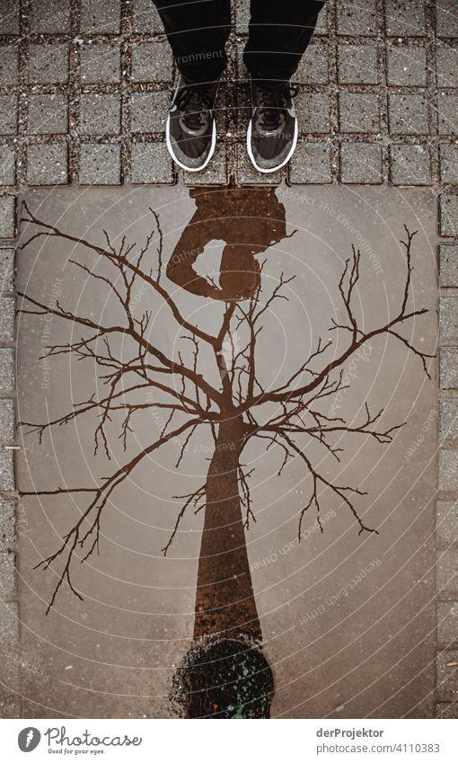 Blätterloser Baum in in der Reflektion einer eckigen Pfütze I Zentralperspektive Reflexion & Spiegelung Schatten Textfreiraum oben Dämmerung Kunstlicht Licht