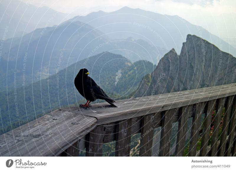 Vogel am Berg Himmel Natur blau Sommer Landschaft Wolken Tier schwarz Wald Umwelt Berge u. Gebirge grau Holz Felsen Beine Horizont