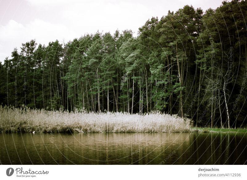 Franken Idyll im Frühjahr. Der See mit leichter Spiegelung  ,grüne Wiese, Bäume und noch weißes Schilf. Seeufer Farbfoto Außenaufnahme Landschaft Umwelt