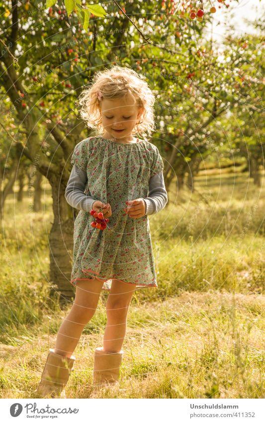 Die Kirschflüsterin Mensch Kind Natur Sommer Baum Mädchen Landschaft Umwelt Leben Gras Spielen Garten Freizeit & Hobby Frucht gold Kindheit