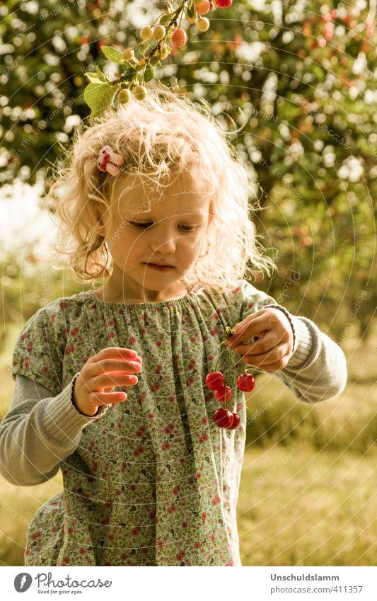Kirschen zählen Mensch Kind Sommer Sonne Baum Mädchen Freude Leben Gefühle Gras Haare & Frisuren hell Garten Lebensmittel Freizeit & Hobby Frucht
