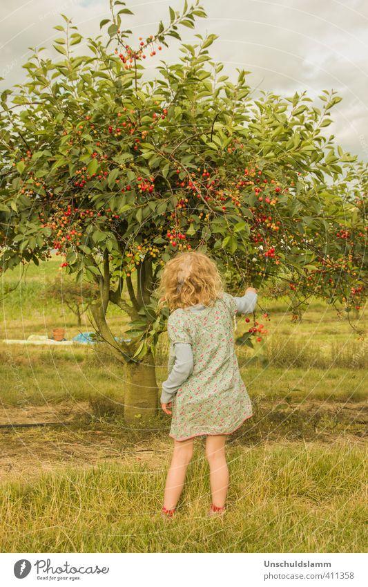 Zeit der Kirschen Mensch Kind Natur grün Sommer Baum Mädchen Landschaft Freude Umwelt Wärme Leben Glück Garten Stimmung Freizeit & Hobby