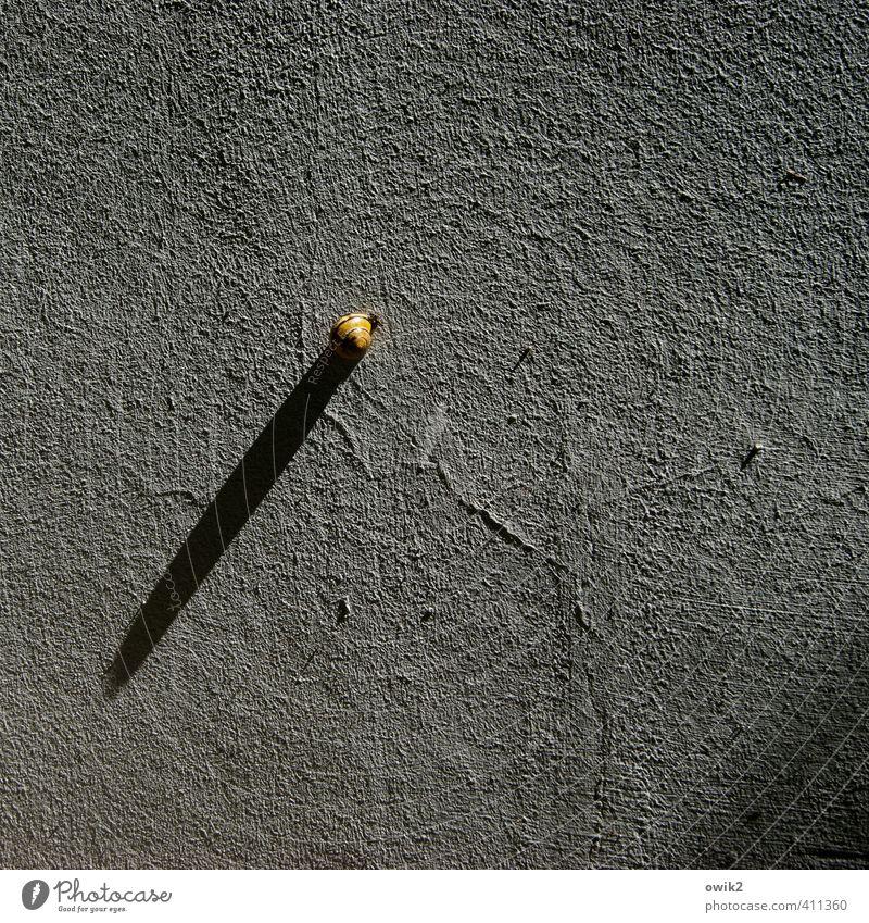 Schnecke spielt Sonnenuhr Mauer Wand Fassade Oberflächenstruktur Putzfassade rau 1 Tier sitzen Spielen warten einfach klein nah trocken Freude geduldig ruhig