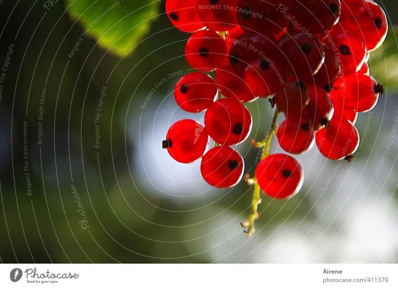 Sonnwendfeierdeko Lebensmittel Frucht Beeren Johannisbeeren Garten Johannisnacht Sommersonnenwende Pflanze Fruchtstand Lampion Ball Kugel leuchten frisch