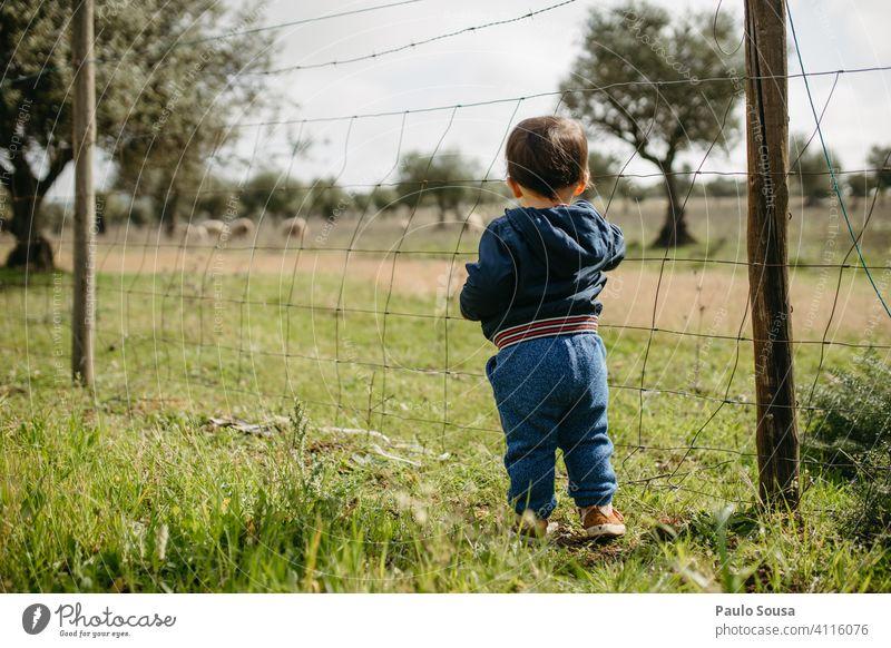 Rückansicht Kind schaut auf Schafe 1-3 Jahre Kaukasier Neugier ländlich Ländliche Szene Freude Natur Kleinkind Außenaufnahme Mensch Farbfoto Kindheit Tierliebe