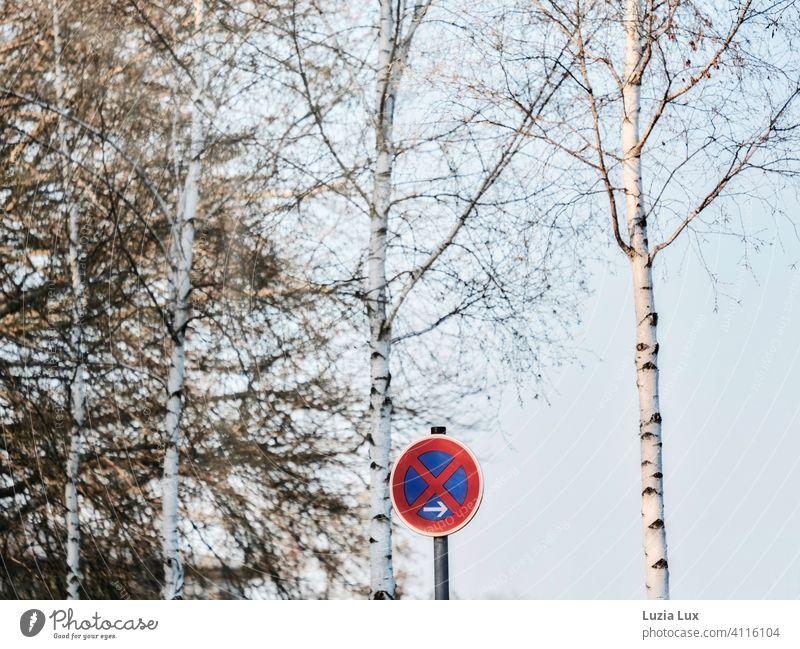 Halteverbot unter Birken Schilder & Markierungen Verkehrszeichen Verkehrsschild Frühling blauer Himmel Farbfoto Außenaufnahme Hinweisschild Menschenleer Zeichen