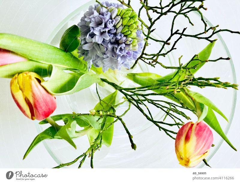 Frühlingsblumen Tulpen Hyazinthe Blumenstrauß Blüte Pflanze Natur grün schön Blühend Dekoration & Verzierung rot rosa Innenaufnahme Tag Farbfoto gelb Blatt