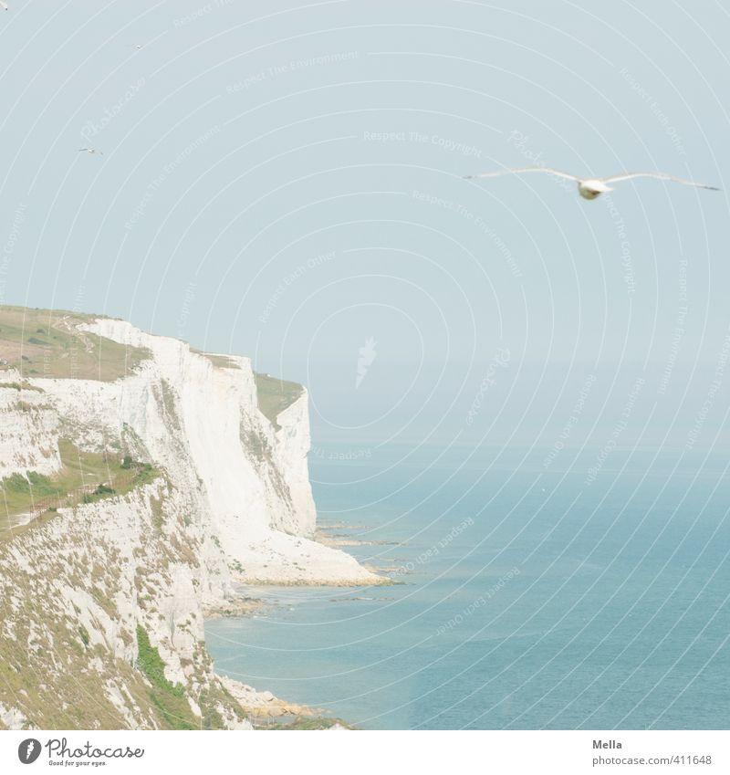 """ ... and the car reverses over ... Umwelt Natur Landschaft Himmel Schönes Wetter Küste Meer Klippe Kreidefelsen Dover England Kent Europa Menschenleer Tier"